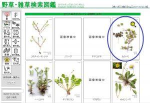 植物図鑑03