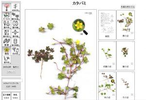 植物図鑑04