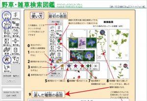 植物図鑑01